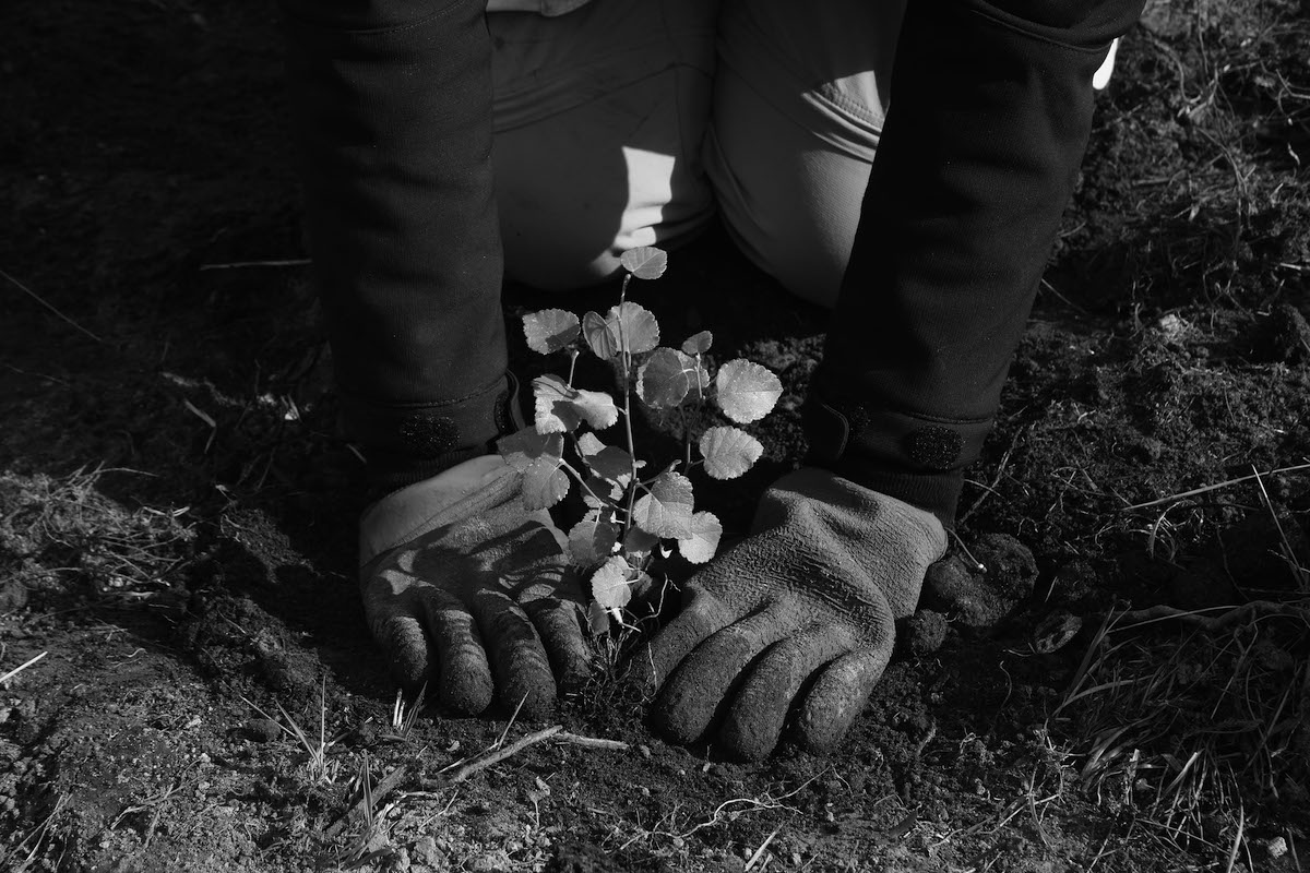 蘇格蘭公益組織-Trees-for-Life植樹照
